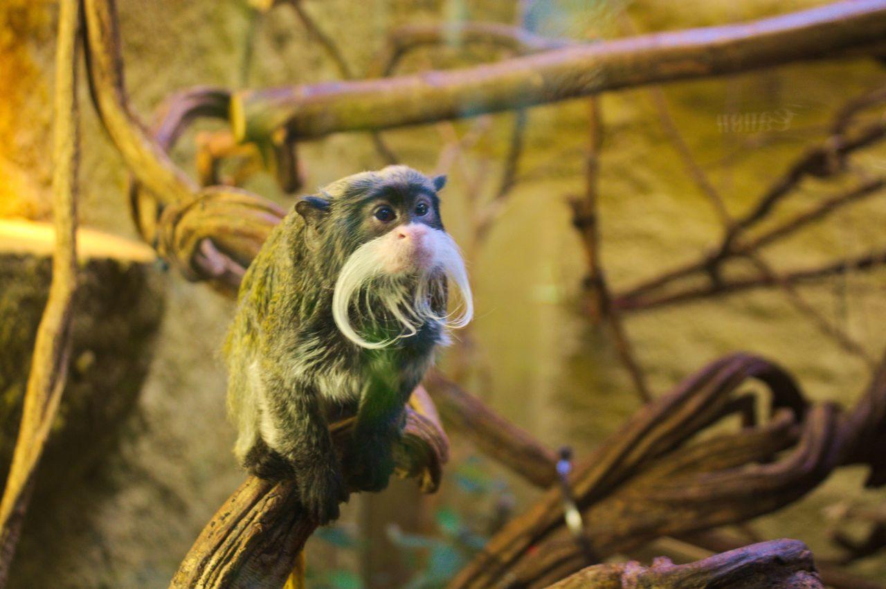 Calando Pflegedienst im Zoo Dresden